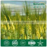 Organic Barley Grass Powder (GMP factory)