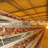 Turnkey Poultry Farm Projects for Feeding Layers