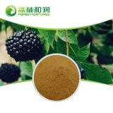 Natural Acanthopanax Senticosus Root Extract acanthopannx senticosus saponins 1.5%