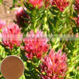 Rhodiola Rosea Powder Extract / Smilax aristolochiaefolia extract/ Rhodiola sachalinensis extract
