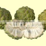 Fresh Custard Apple with High Quality- Best Price