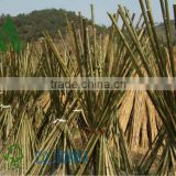 bamboo sticks/bamboo canes/bamboo poles at cheap price