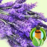 Pure France Lavender Essential Oil