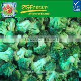 New Season deep freeze iqf vegetable frozen broccoli bulk packing