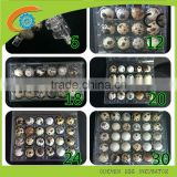 custom plastic bulk egg cartons wholesale 24 quail egg cartons for sale plastic quail egg tray