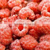 frozen cultivated raspberry