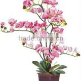 Artificial flower-Butterfly Orchid
