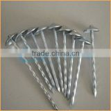 Top quality copper roofing roofing nails trusted Chuanghe suppliers from alibaba com