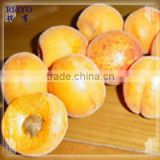 IQF apricot / frozen fruits