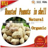 snack food Delicious roasted peanuts in shell for sale organic health food with good taste