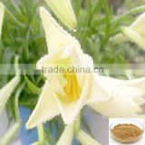100% Pure Natural Lily bulb extract