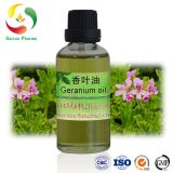 Geranium Oil Pelargonium oil pure natural oil manufacturer best price plant essential oil