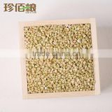 roasted buckwheat kernel seed wholesale at best price