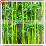 Newest Ourdoor Decorative Artificial Green Bamboo Stick Bamboo Poles Wholesale