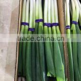 Fresh Onion Long Type Green Onion