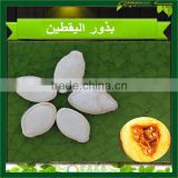 new crop Hot Chinese shine skin pumpkin seeds , benefits of pumpkin seed