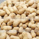 Supplying Raw Bulk Peanut in Shell with Different Specification for Sales
