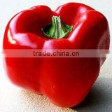 Wholesale Supplier for OLEORESIN PAPRIKA (Spice Oleoresin)