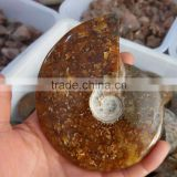 Natural conch ammonite fossil for sale natural stone decoration