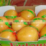 New crop fresh pomelo fresh fruit importers
