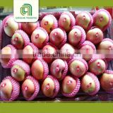 bulk fresh fruit fuji apple wholesale distributors