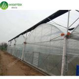 Hot Sale Single-Span Film greenhouse indoor
