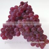 Purple Powder Grape Skin Extract, Grape skin Extract