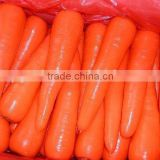 2012 crop Chinese Fresh Carrot