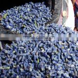 Super Grade France Blue Xinjiang Lavender Flower