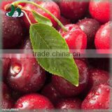 2015 Canned fruit cherry tomato seeds