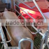 High quality led infrared heater in farrowing crate