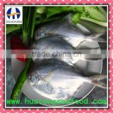 Frozen Silver Pomfret frozen fish 150-200g/pc