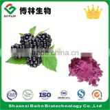 2016 Hot Sale Organic Freeze Dried Blackberry Fruit Powder Instant Blackberry Fruit Juice Powder