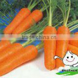 baby carrot / vegetables containing vitamin /fresh vegetable