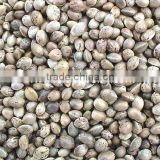 Chinese Hemp Seeds for Bird Feeding