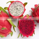 Good Price Fresh Dragon Fruit For Sale/ Vietnam Pitaya