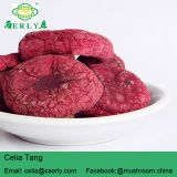 Manufacture Cancer cure herbs red mushroom