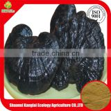 Health Product Reishi Mushroom Extract/Chinese Lingzhi Extract Powder with Good Quality and Free Sample
