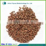 High quality radish seed ( Laifuzi)