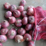 fresh red onion onions