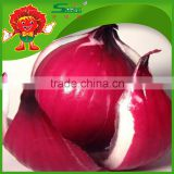 cheap onion from China color red and yellow types red onions