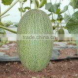 Hybrid muskmelon seeds hami sweet melon for sale No.2