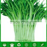 MWS02 Xiye white stem high quality water spinach seeds for planting