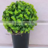 Shengjie hot selling Artificial boxwood wreath with happy price