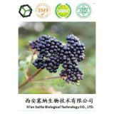 Plant Extract Lose Weight Ingredient Real 100% Organic Maqui BerryExtract/Maqui Berry Powder
