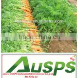 China new crop fresh carrot---hot sale !