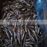 Good Quality Frozen Block Anchovy Fish