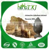 Best quality cistanche tubulosa extract powder