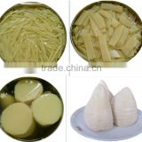 Canned Bamboo Shoot in tin with factory price