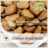 Favorable Price and High Quality Organic Broad Bean